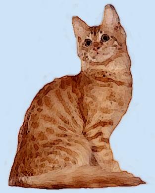Turkish angora kittens for sale michigan